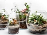 Флорариум своими руками — мастер-класс по созданию своими руками, идеи посадки и оформления + совет в выборе растений и емкости