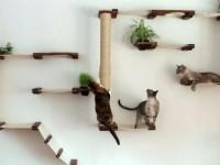 Когтеточки и кошачьи домики своими руками