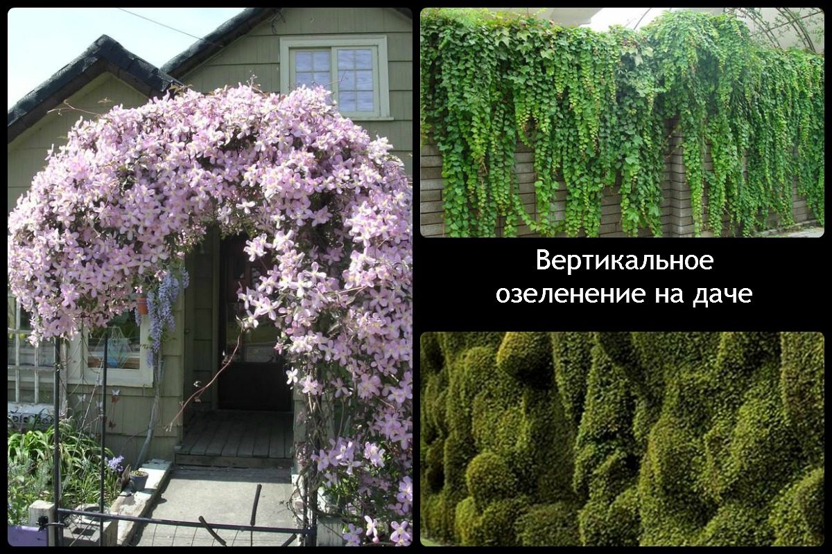 Варианты использования вертикального озеленения на дачае 3