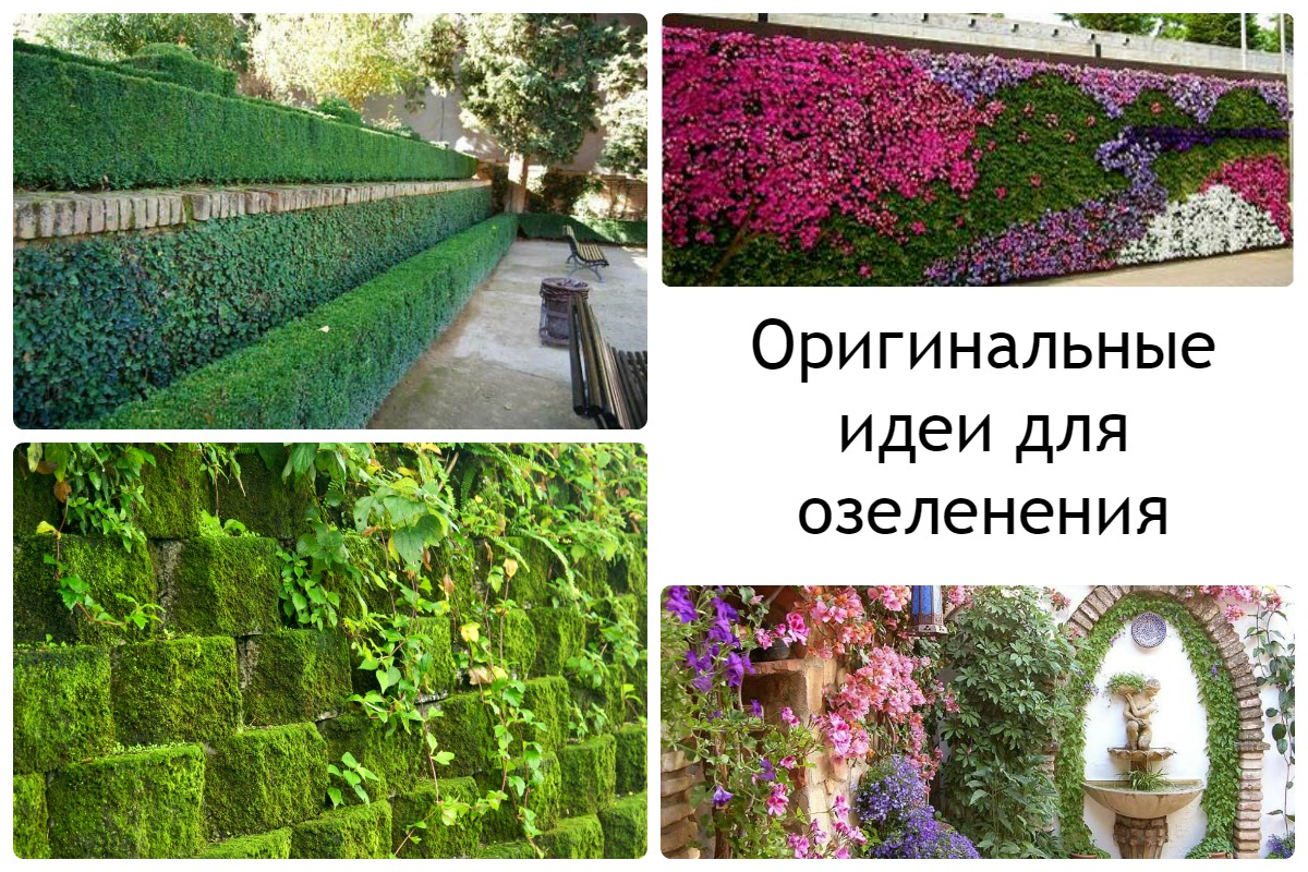 Варианты использования вертикального озеленения на дачае 5