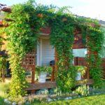 Вертикальное озеленение дачи - 1