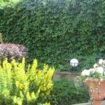 вертикального озеленения дачи - 10