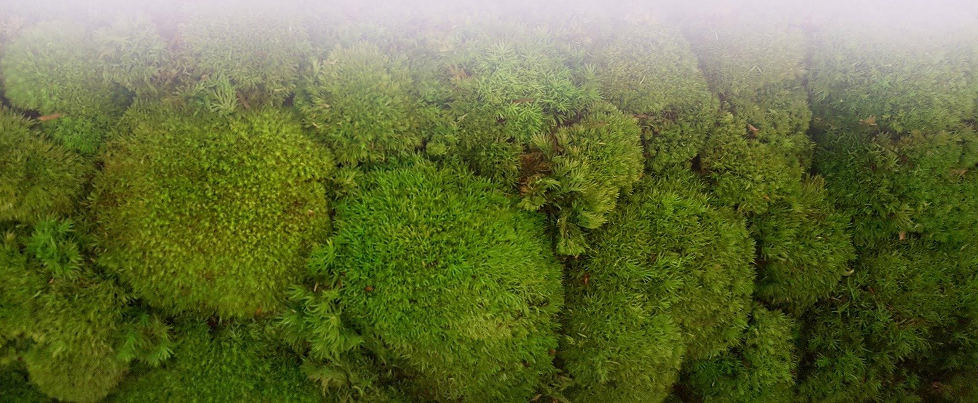 используем мох 2