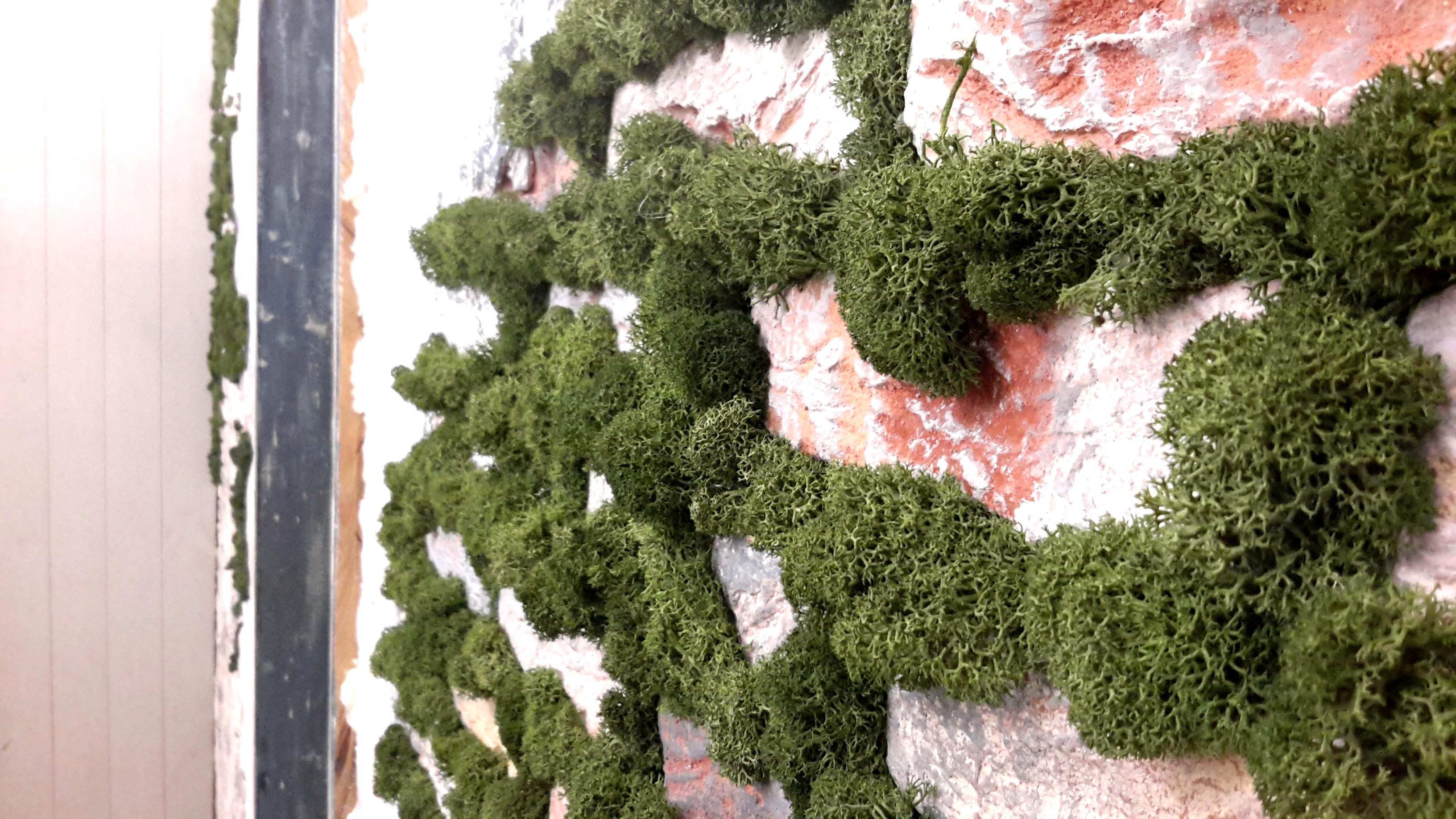 озеленение мохом