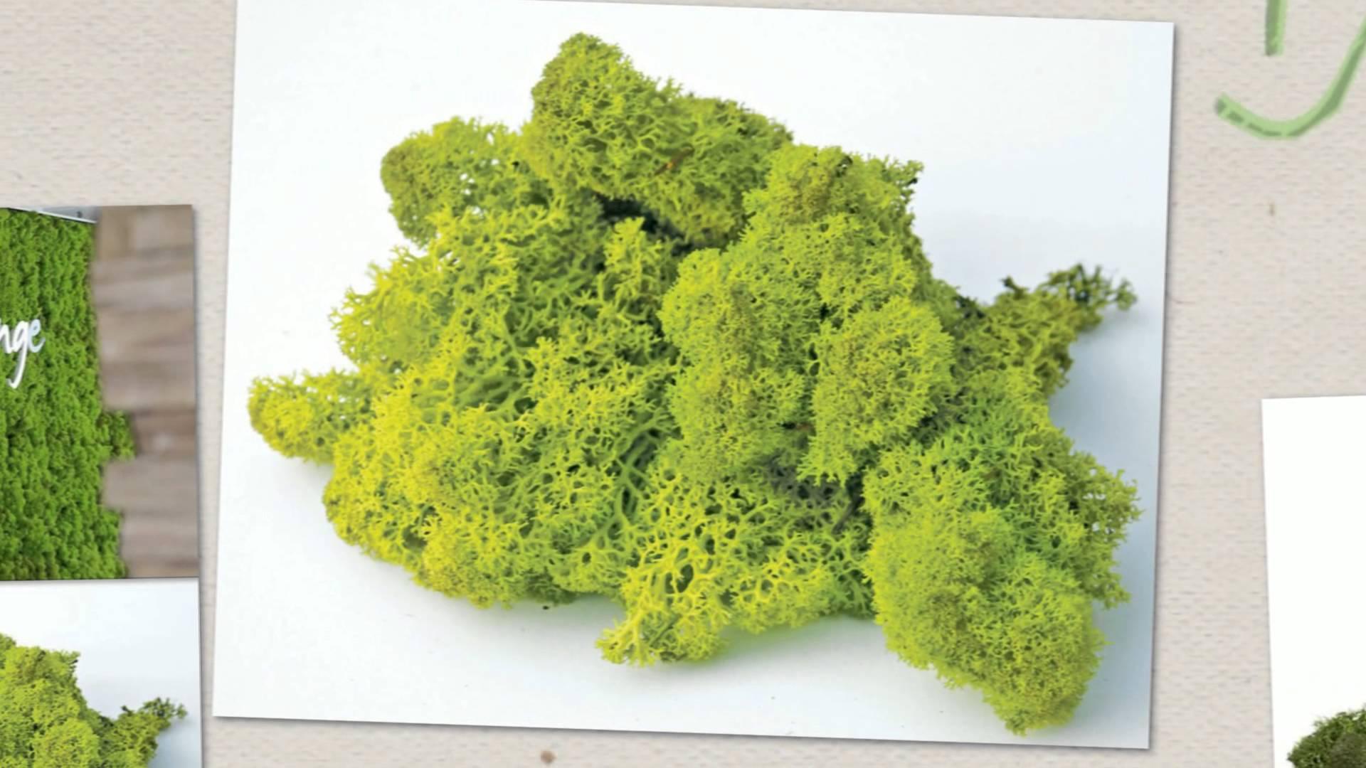 озеленение мохом 9