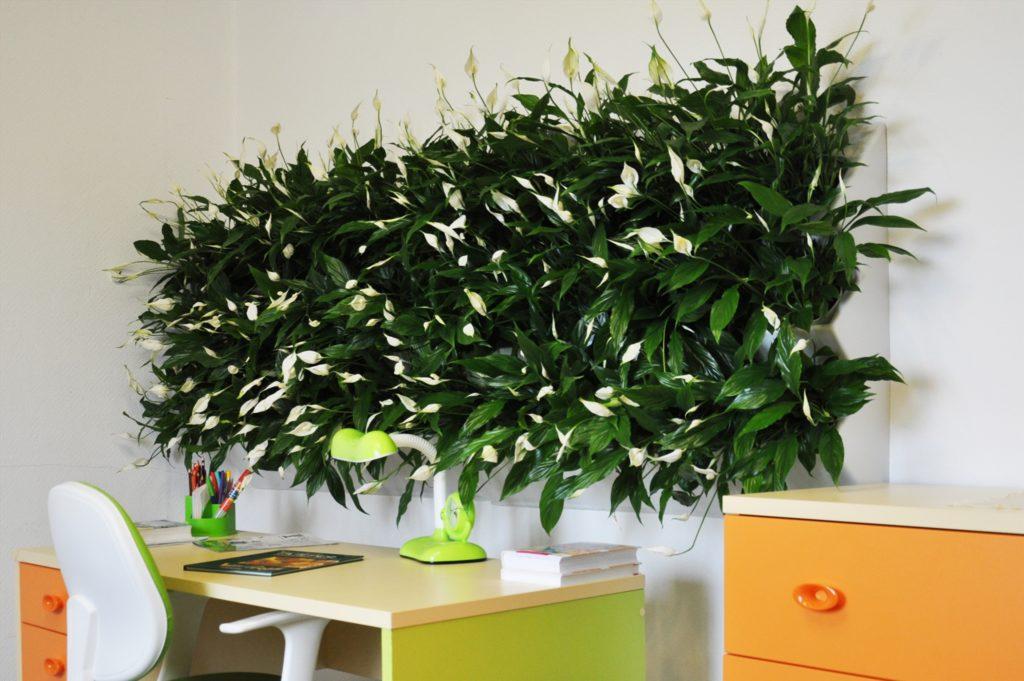 Вертикальное озеленение в офисе своими руками 16