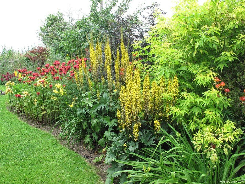 Высокорослые садовые цветы
