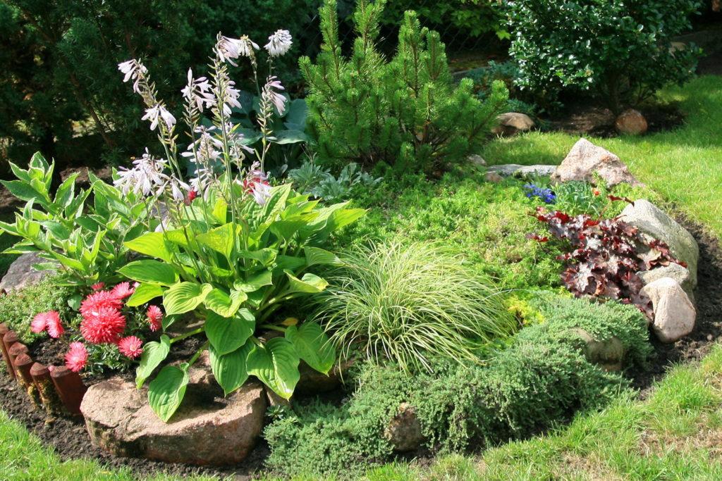 Рокарии на даче своими руками растения