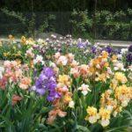 Цветники на даче 10