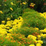 Цветники на даче 4