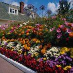 Цветники на даче 7
