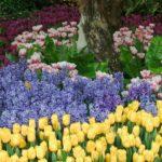 cvetnik_v_sadu_1600x1200