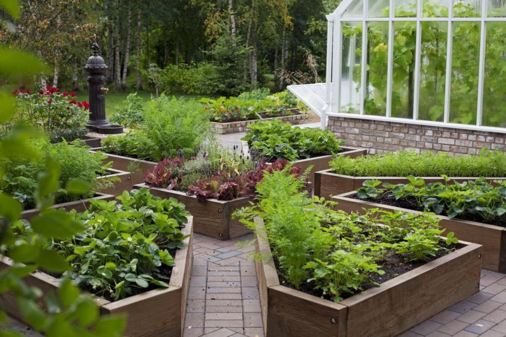 Фото идей для огородов и дач