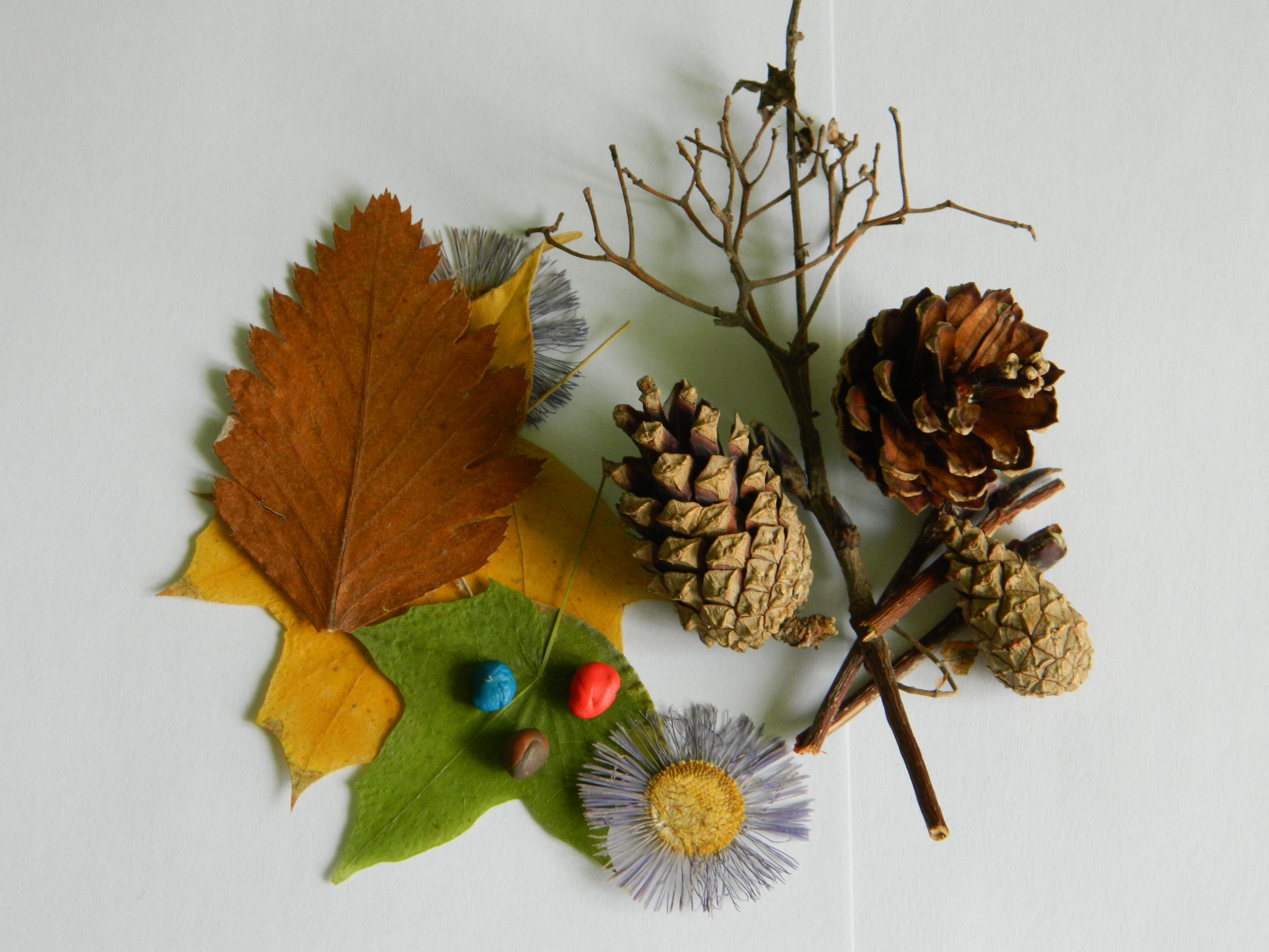 Поделки из шишек гербарий