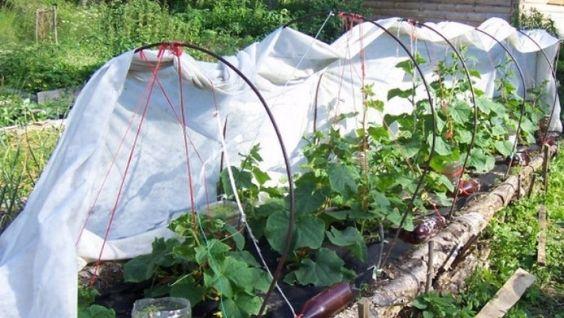 Как сооружать укрытия для растений