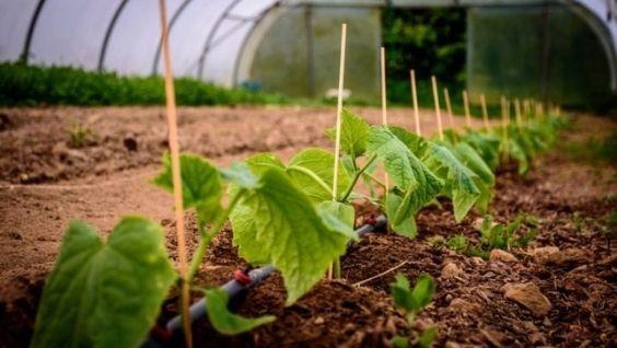 Как сооружать укрытия для растений?